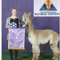 Color-Champion bei der Internationalen Alpaca Odysse 2014